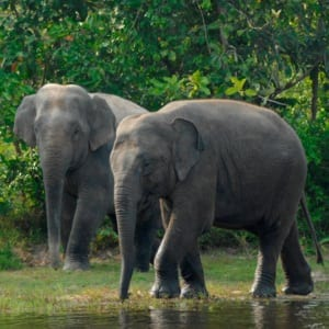 endangered species day What are you doing this Endangered Species Day? Endangered species day elephant 300x300