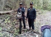 chainsaws Hunting camps and chainsaws Forest rangers cardamom 200x145
