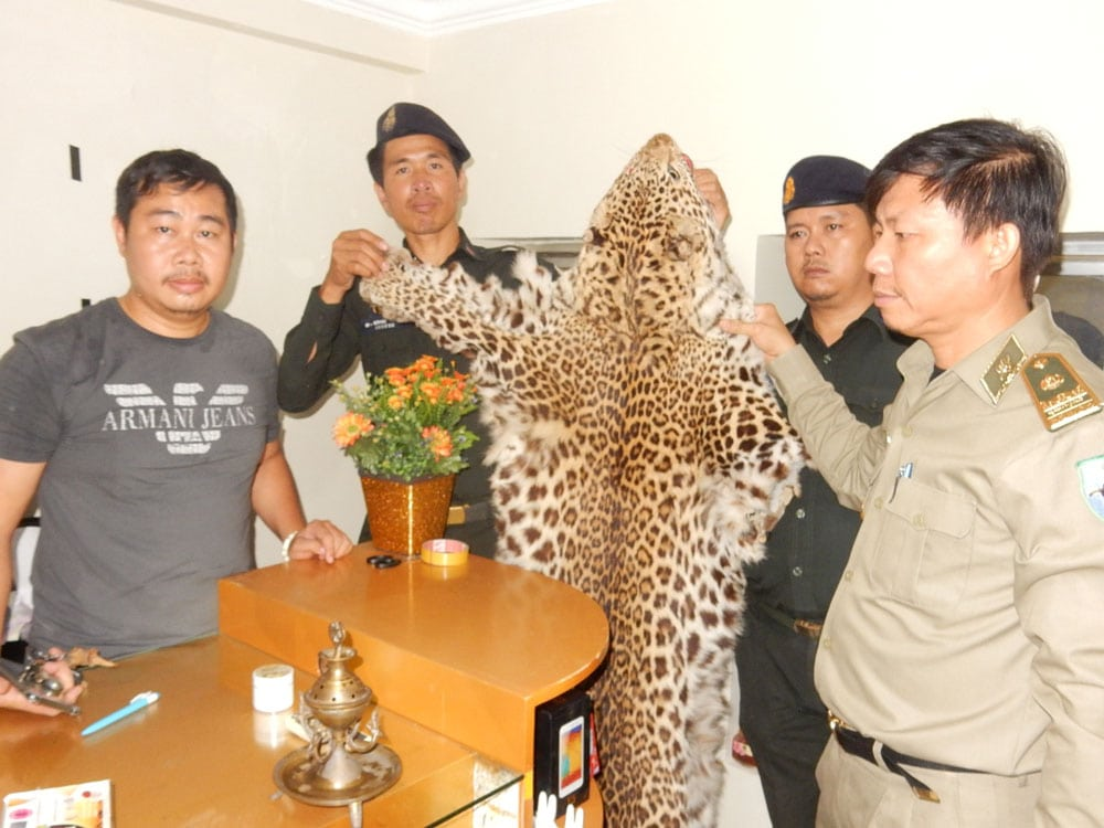 wildlife trafficking cambodia Wildlife Traffickers Arrested – Stockpile included clouded leopard skin, bear paw & ivory WRRT confiscate leopard pelt