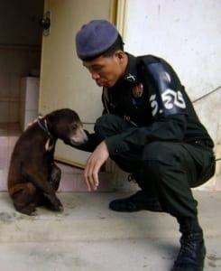 wildlife police Wildlife Police WRRT sun bear rescue copy 245x300