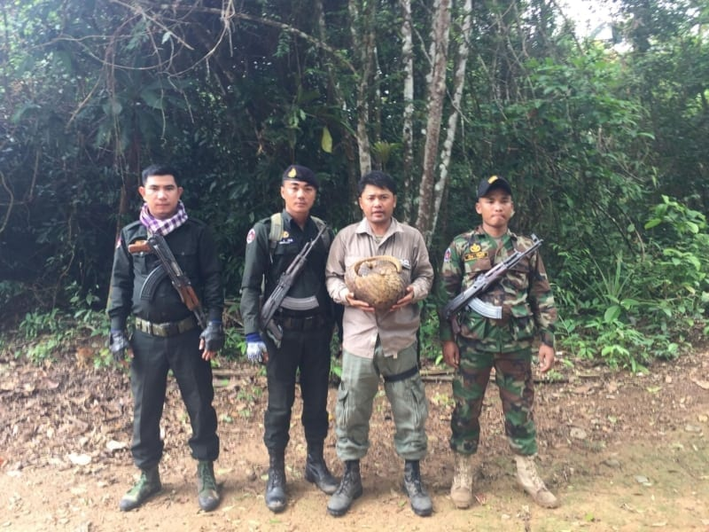 anti-poaching unit saves critically endangered pangolin Anti-Poaching unit saves critically endangered pangolin Wildlife Alliance rangers saved critically endangered pangolin 800x600