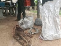 the rangers  confiscated 160 wildlife snares and dismantled 100 meters of plastic bird net The rangers  confiscated 160 wildlife snares and dismantled 100 meters of plastic bird net animal traps found under house 200x150