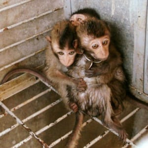 wildlife police Wildlife Police scared baby macaques wrrt 300x300