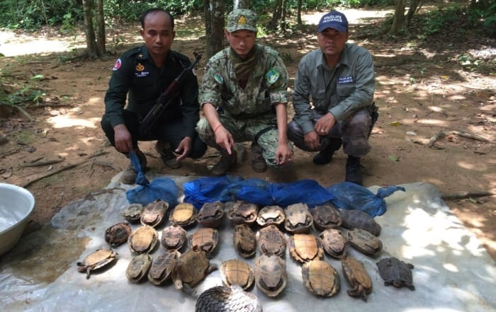 wildlife in cambodia Home Critically Endangered pangolin saved by rangers 700x441