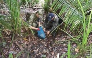 newsletter Newsletter Critically Endangered pangolin saved by rangers release 320x202