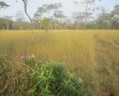 giant ibis survey- frédéric goes GIANT Ibis survey- Frédéric GOES Gian Ibis camera trap location Cambodia
