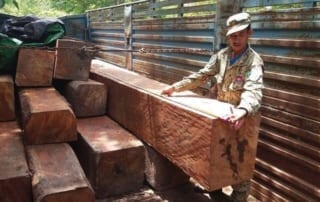 the rangers ambushed a truck transporting illegal timber The rangers ambushed a truck transporting illegal timber illegal timber cought by Wildlife Alliance Rangers 320x202
