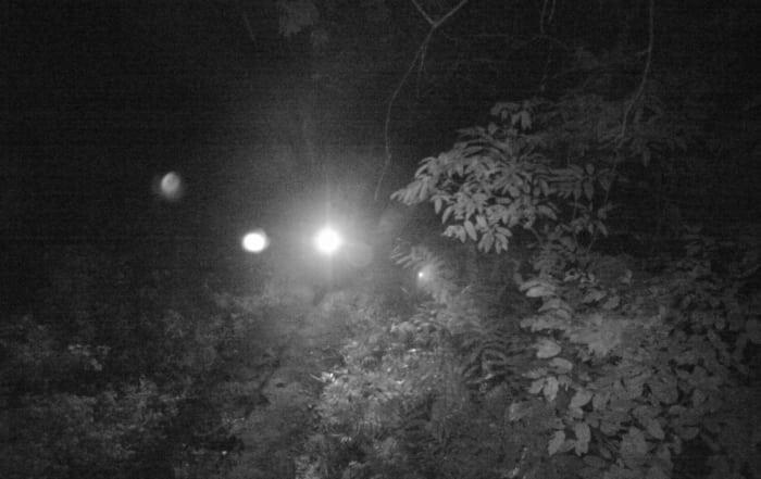 wildlife in cambodia Home trail cameras used to cach poachers Cambodia 700x441