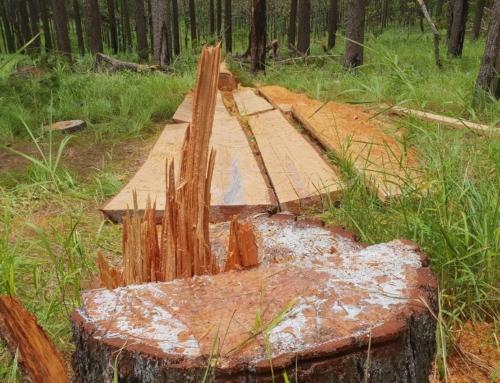 Logging Cambodia