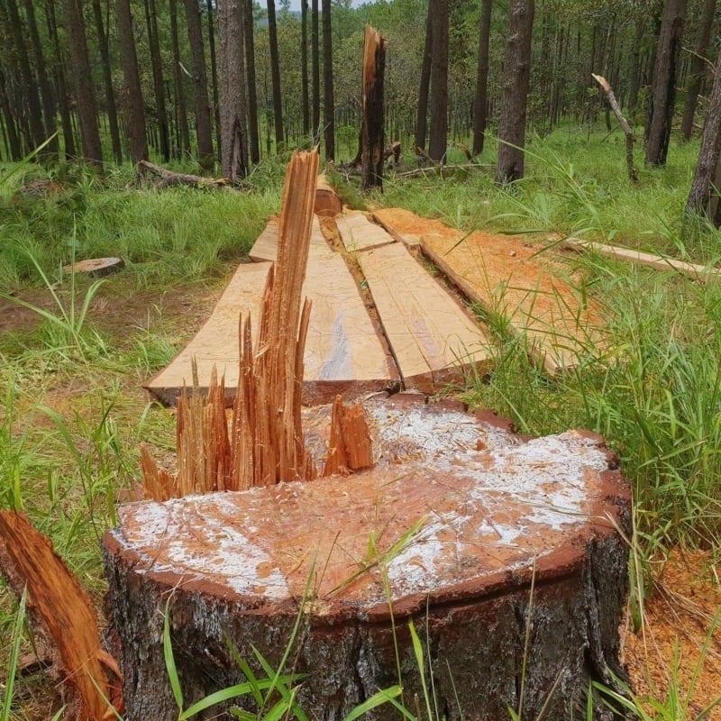 Logging Cambodia IMG 20180730 074453 713 800x800