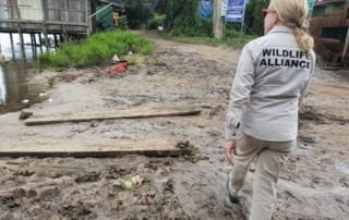 conservation Conservation Turned to Relief Efforts Suwanna Gauntlett Wildlife Alliance in Chi Phat 320x202
