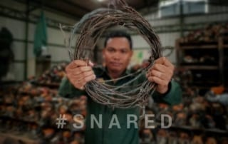 #snared #Snared Wildlife extinction 320x202