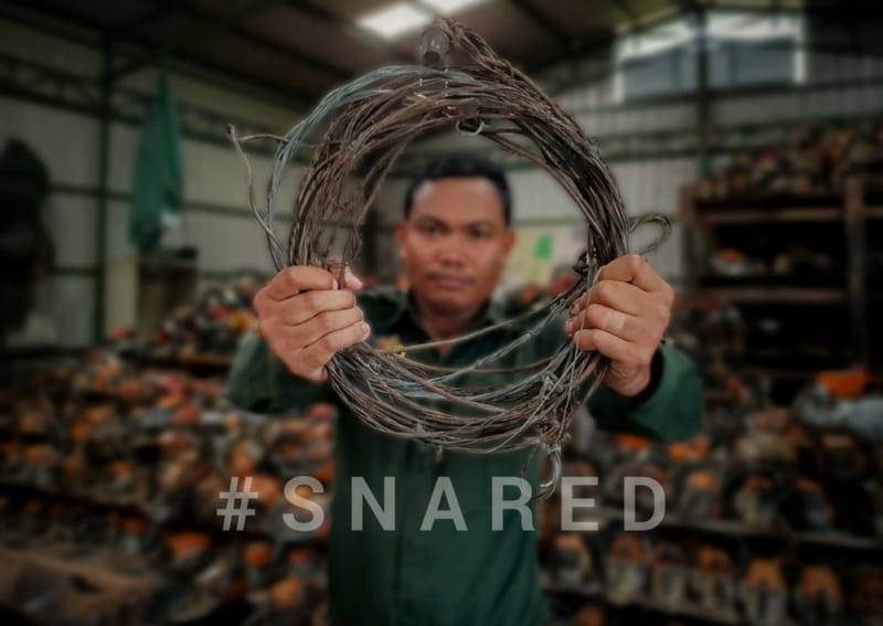 #snared #Snared Wildlife extinction 800x567