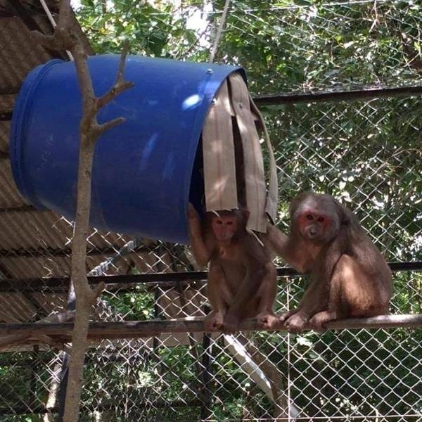 Gift shop for wild animals Barrel Enrichment  600x600