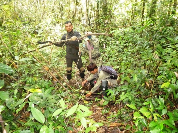asiatic wild dog Dhole (Asiatic Wild Dog) rescued from a lethal snare Dole trapped in snare