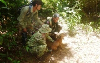 asiatic wild dog Dhole (Asiatic Wild Dog) rescued from a lethal snare Dole wild dog trapped 320x202