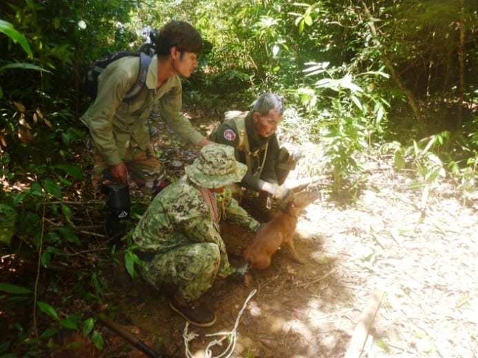asiatic wild dog Dhole (Asiatic Wild Dog) rescued from a lethal snare Dole wild dog trapped