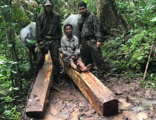 Illegal international trade of luxury timber in Southeast Asia
