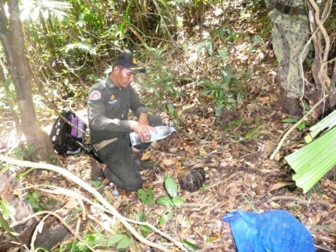 endangered pangolin Critically endangered pangolin saved by Wildlife Alliance rangers The rangers Pangolin in the forest