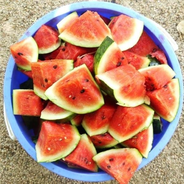[object object] Gift shop for wild animals Watermelon for animals 600x600