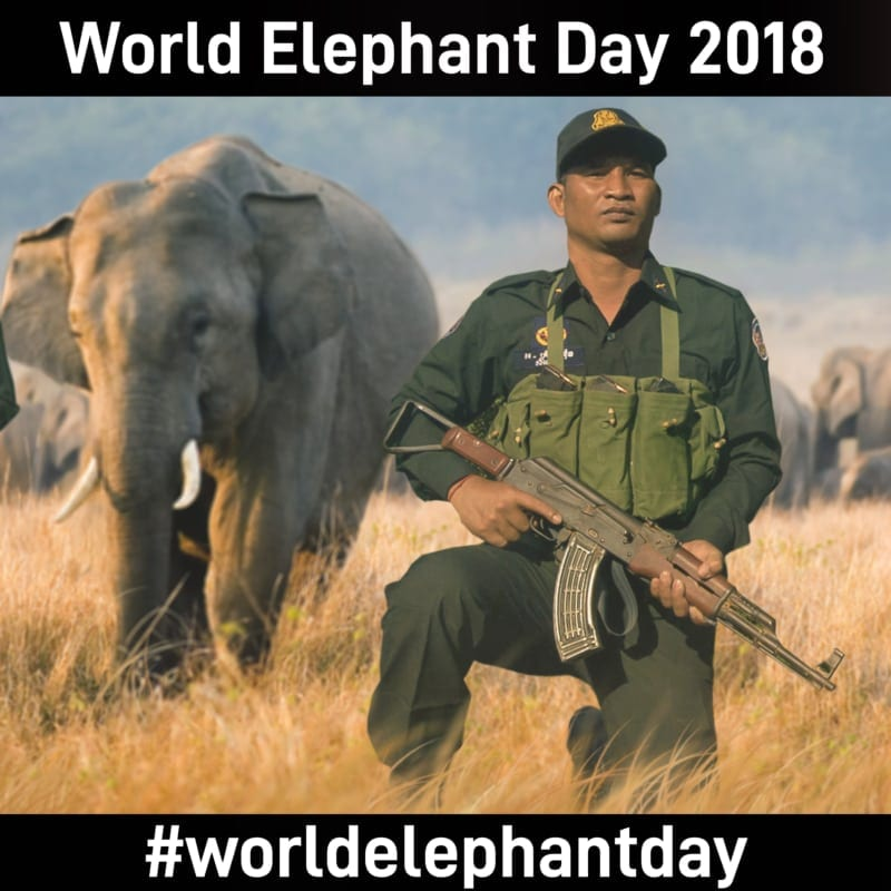 world elephant day 2018 World Elephant Day 2018 World Elephant Day 2018 Celebration 800x800