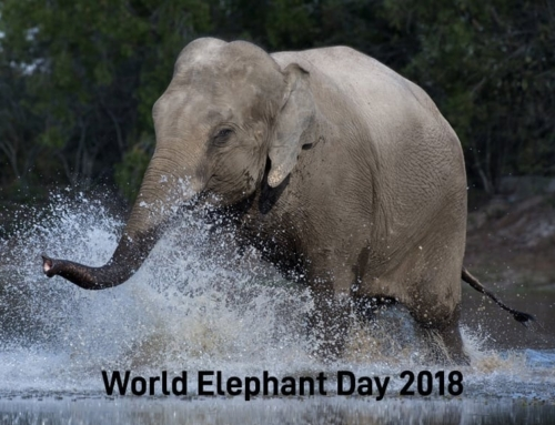 World Elephant Day 2018