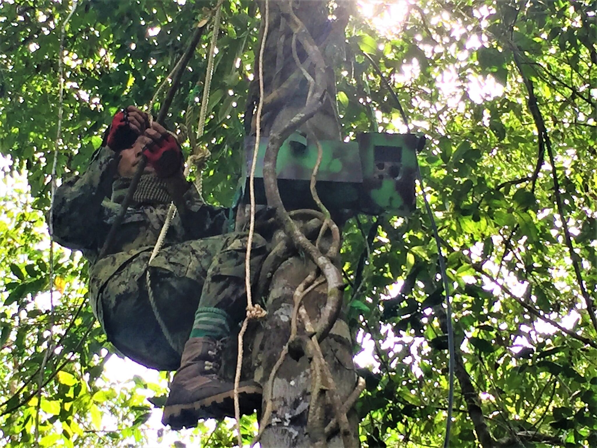 technology Technology is changing the nature of conservation cellular trailcams instalation