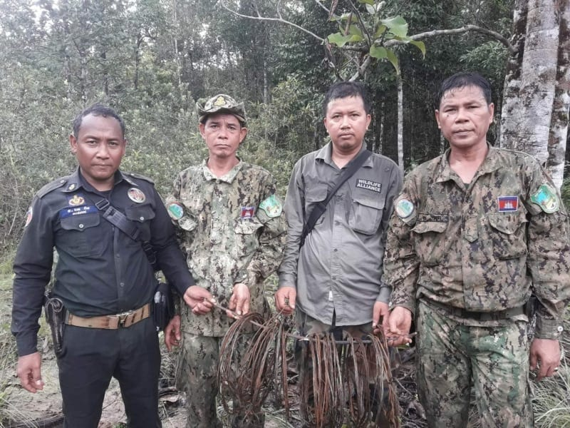animal traps Cruel Wildlife metal traps metal traps cambodia 800x600