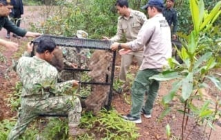 rescued macaques A motley troop of rescued macaques were released into the wild motley troop released by Wildlfie Alliance 320x202
