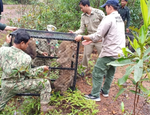 A motley troop of rescued macaques were released into the wild