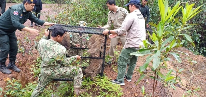 rescued macaques A motley troop of rescued macaques were released into the wild motley troop released by Wildlfie Alliance 800x378