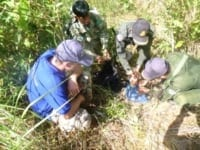 endangered pangolin Critically endangered pangolin saved by Wildlife Alliance rangers pangoln saved by rangers 200x150