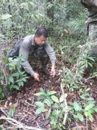 animal traps Cruel Wildlife metal traps the rangers dismantle metal traps 200x267