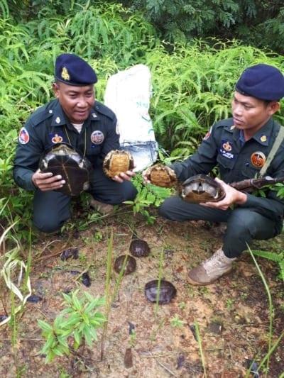 turtle rescue Turtle rescue turtles rescue 400x533