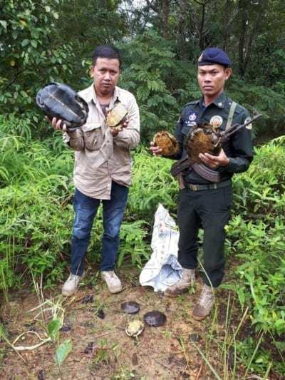 turtle rescue Turtle rescue turtles rescued by rangers 400x533