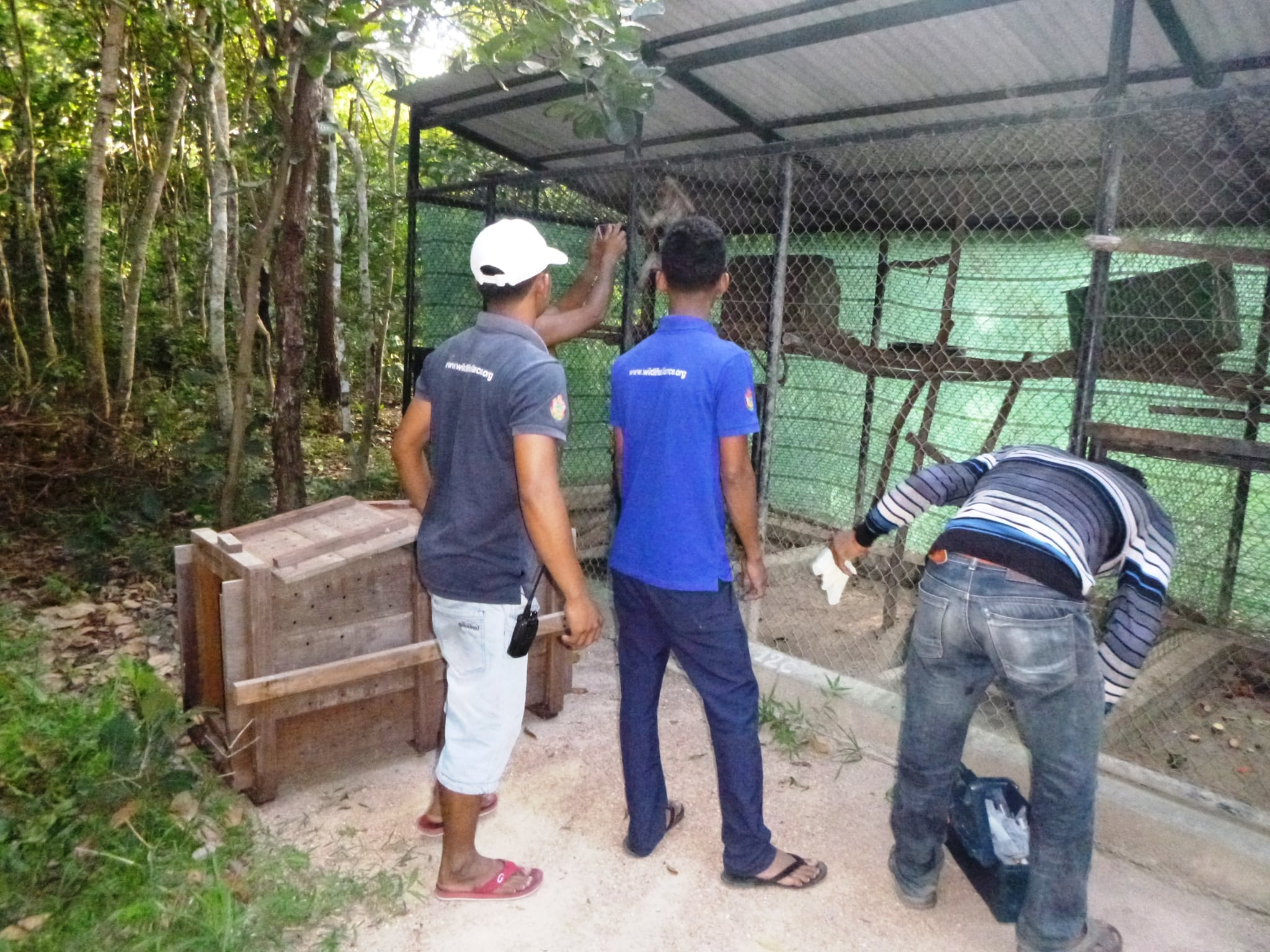 macaque pair rescued from angkor taken to phnom tamao wildlife rescue center Amari and Lori taken to Phnom Tamao Wildlife Rescue Center Amari and Lori Wildlife Rapid Rescue Team 2