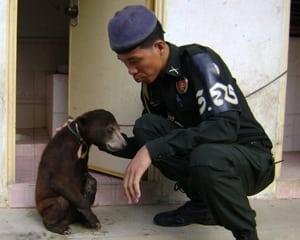 sun bear Sun Bear Cambodia Sun Bear rescued