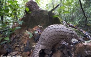 what is behavioral enrichment? What is behavioral enrichment? Sunda Pangolin termite mound 320x202