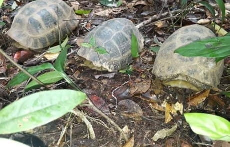 anti-poaching GPDS Anti-Poaching Unit fast intervention Turtle release 460x295
