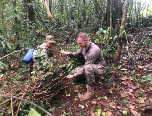 Lethal Traps dismantled by our Forest Guards