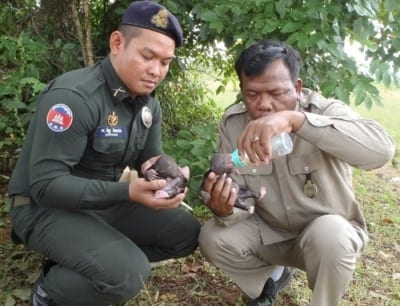 sun bear Sun Bear Wildlife Alliance police save Sun Bear Cambodia 400x306