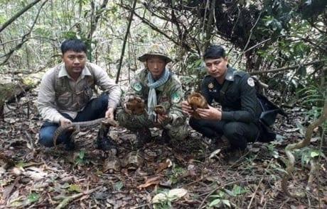 anti-poaching GPDS Anti-Poaching Unit fast intervention Wildlife Alliance rangers turtles release 460x295