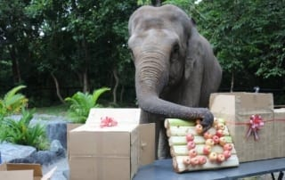 what is behavioral enrichment? What is behavioral enrichment? lucky birthday enrichment 320x202