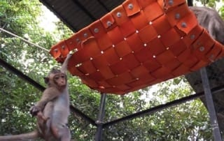 what is behavioral enrichment? What is behavioral enrichment? monkey playing on hammock enrichment 320x202