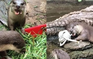 what is behavioral enrichment? What is behavioral enrichment? otter enrichment 320x202