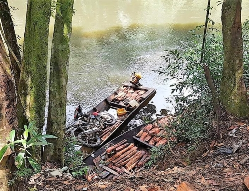 Man arrested for smuggling luxury timber