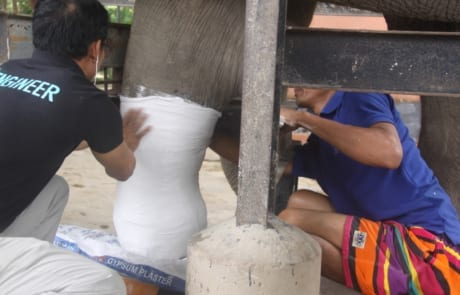 rescued elephant, chhouk, receives a new prosthetic foot Rescued elephant, Chhouk, receives a new prosthetic foot 2018 chhouk cspo prosthetic shoe fitting 460x295