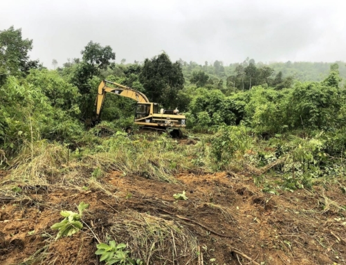 Excavator confiscated for clearing state forest