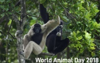 world animal day 2018 World Animal Day 2018 World Animal Day 2018 320x202