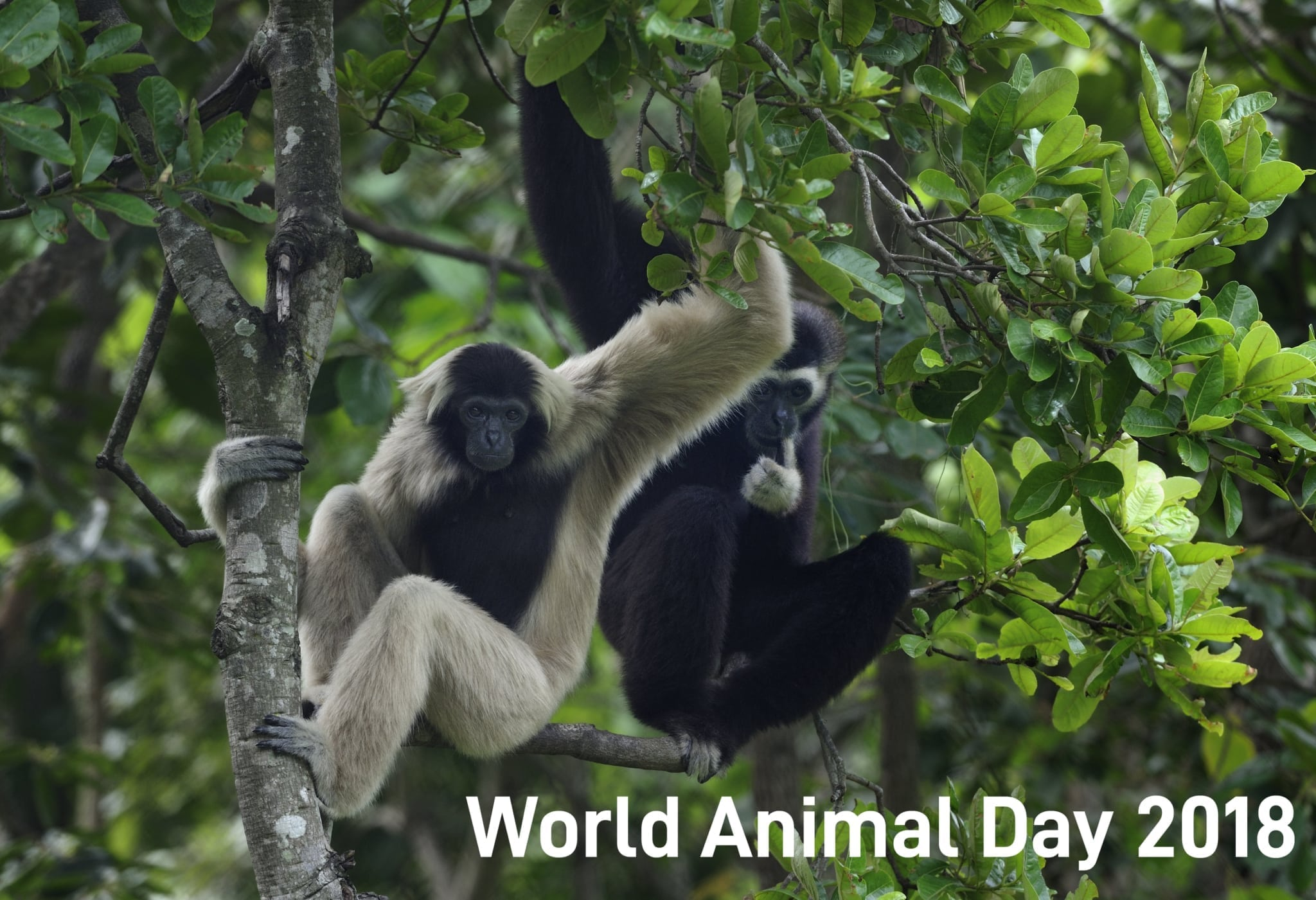 world animal day 2018 World Animal Day 2018 World Animal Day 2018
